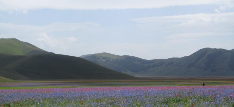 Piana di Castelluccio di Norcia durante la fioritura