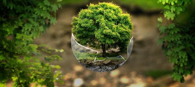 Oroscopo_celtico_alberi