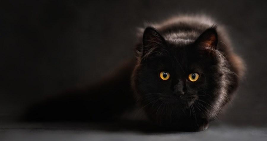 gatto_giornata_internazionale