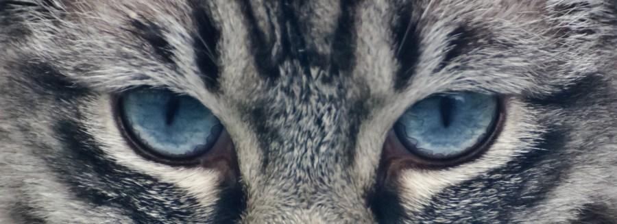 gatto_poteri_paranormali