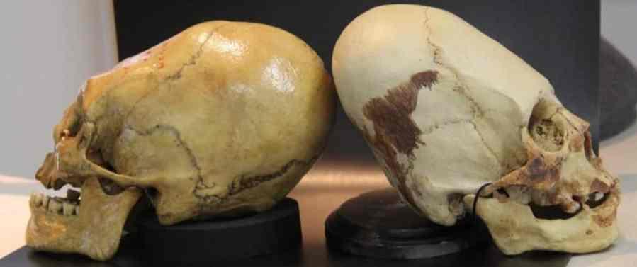 crani allungati Peru