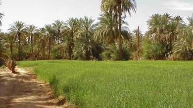 Photo of تعاون بين موريتانيا وفرنسا في المجال الزراعي