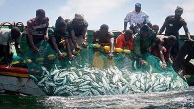 Photo of موريتانيا.. 27 مليون يورو لتكوين العاملين في مجال الصيد