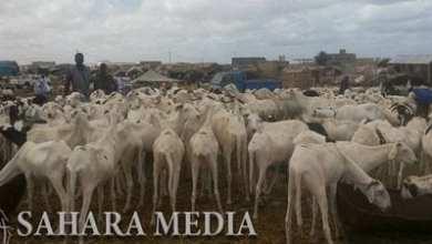 Photo of موريتانيا.. تفتيش صحي للماشية والنباتات المستوردة