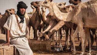 Photo of موريتانيا.. هكذا ستوزع الأعلاف بين الولايات