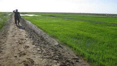 Photo of وزير التنمية الريفية: نتوقع الوصول للاكتفاء الذاتي من الأرز