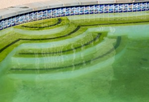 Swimming pool that has grown mold.