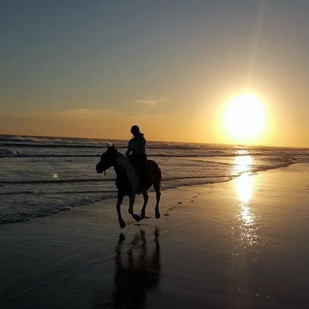 SAHARA TRAILS HORSE RIDING AND FARMSTAYS HORSE RIDING NEW SOUTH WALES FARMSTAY NEW SOUTH
