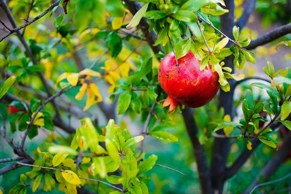 Sahar's Blog 2015 03 17 Grow Baby Grow Taking Advantage of the Many Benefits of Gardening