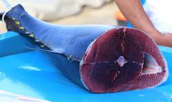 مأكولات-لزيادة-الطاقة-بشكل-طبيعي--فوائد-الصحية--سمك-التونا-