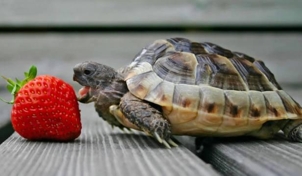تناول الطعام ببطئ