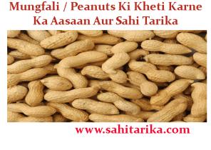 Mungfali / Peanuts Ki Kheti Karne Ka Aasaan Aur Sahi Tarika