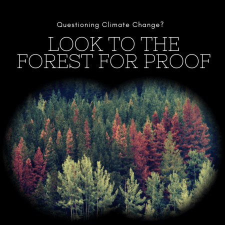 Questioning climate change? Look no further than the forest for proof