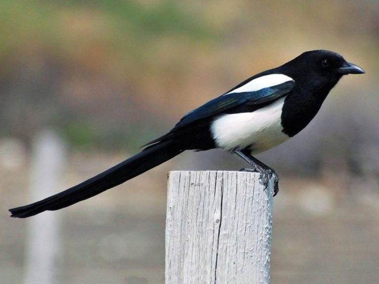 Magpie Marketing communicating in agriculture