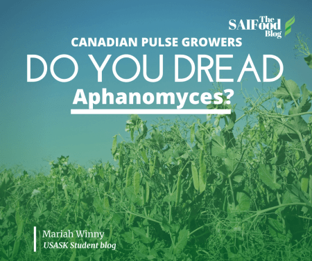 Aphanomyces impacts pulse crops