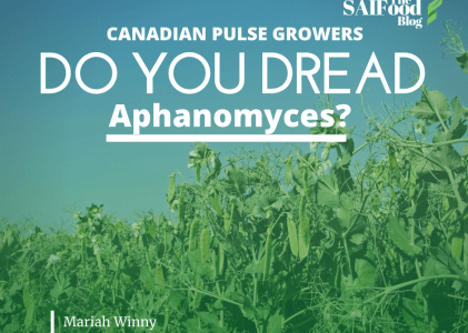 The Dread of Aphanomyces Root Rot Targeting Pulse Crops