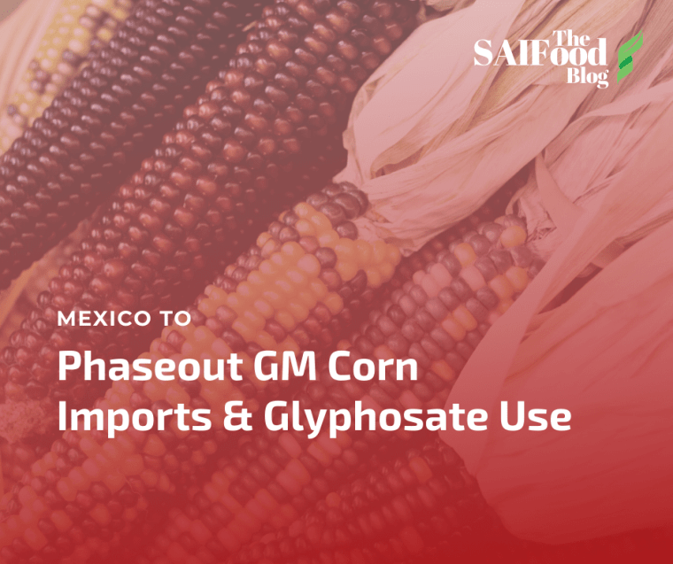 Mexico GM Corn and Glyphosate phasing out