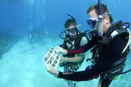 Employment-DiveInstructor