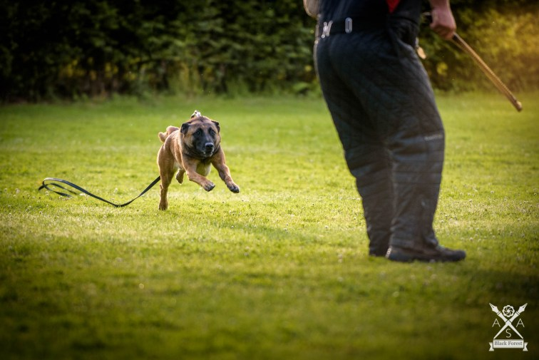 Hunde-Juli16 -AdrianSailer-2