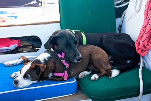sailing_dogs_cuddle