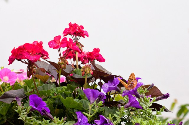 butterfly_flower_lake