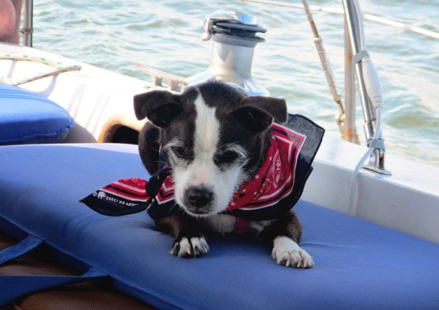 dewey_dog_sailboat