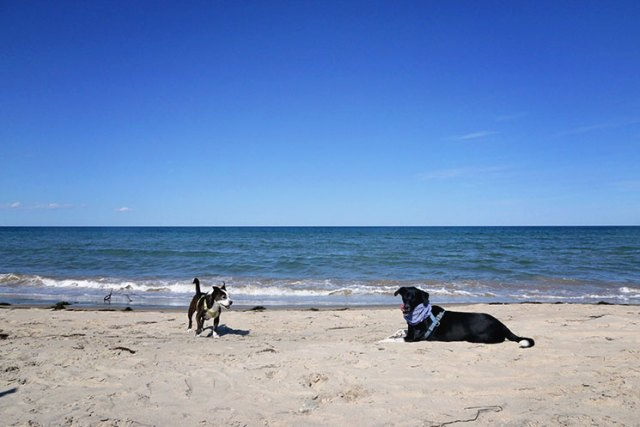The dogs enjoying the beach on Block Island.