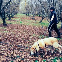Hunting for Truffles in Manjimup, Western Australia