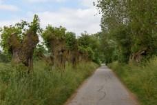 Lyø-Inselwanderung: Baumbestand entlang der Wege
