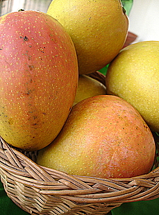 Ripe mangoes from our backyard garden