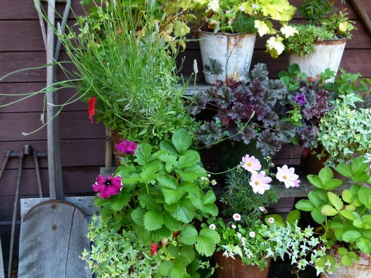 Concours communal des maisons fleuries de Saint-Junien