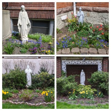 Top: Our original Mary that was on Broadway & Brownell, now in the Convent yard; St Jude; Bottom: St Francis; St Therese, the Little Flower