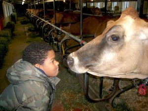Field trip to a Vermont Dairy Farm