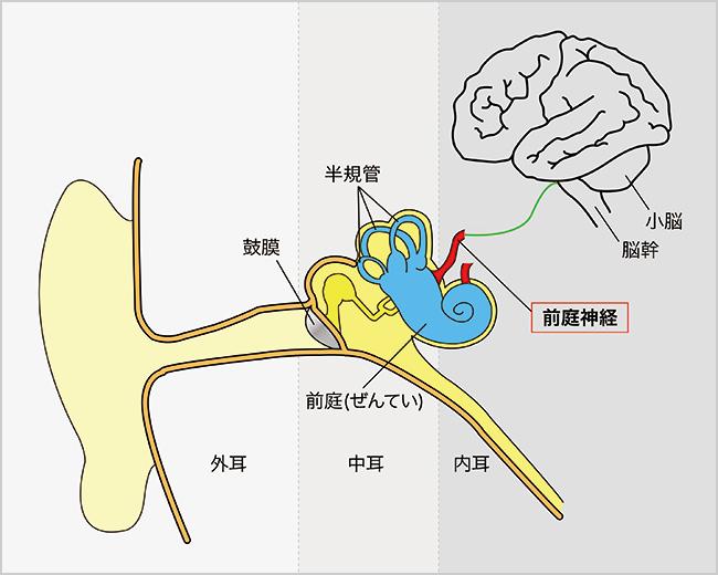 前庭 - Vestibule of the ear - JapaneseClass.jp
