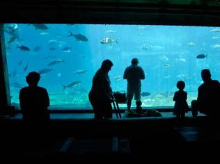 Great aquariums