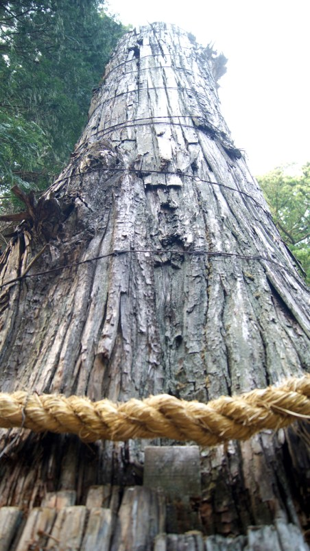 見事な巨木