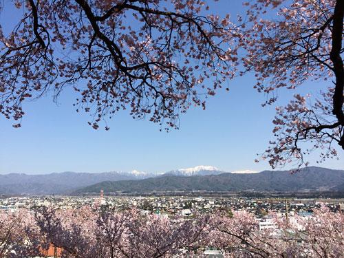140412春日公園桜02