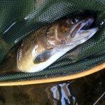 尺岩魚に出会う|木曽川水系 ルアーフィッシング