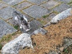 141006ワカサギ釣り01