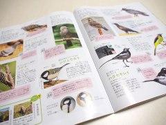 150326ビーパル野鳥図鑑04