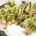 天ぷらは、ムズかし(タラの芽、ウドの芽、コシアブラの天ぷら)