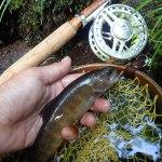 真夏にひんや〜り|木曽川水系 フライフィッシング