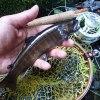 ハックルさんの毛鉤|木曽川水系 フライフィッシング