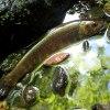 シシ神の住む森へ|木曽川水系 フライフィッシング