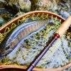 雨と岩魚と温泉と|天竜川水系 フライフィッシング