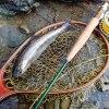 アマゴとちゃんぽん 天竜川水系 フライフィッシング