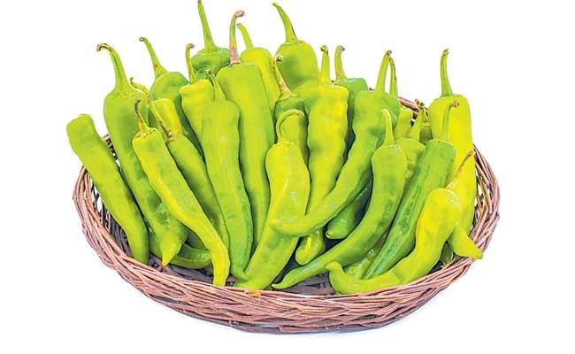 Green Chili Is Very Good For Health - Sakshi