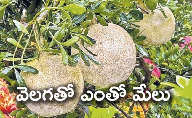 Variet recipes with Wood Apple - Sakshi