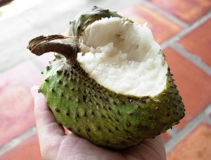 Soursop Cancer Cure