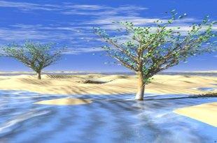tree-in-desert